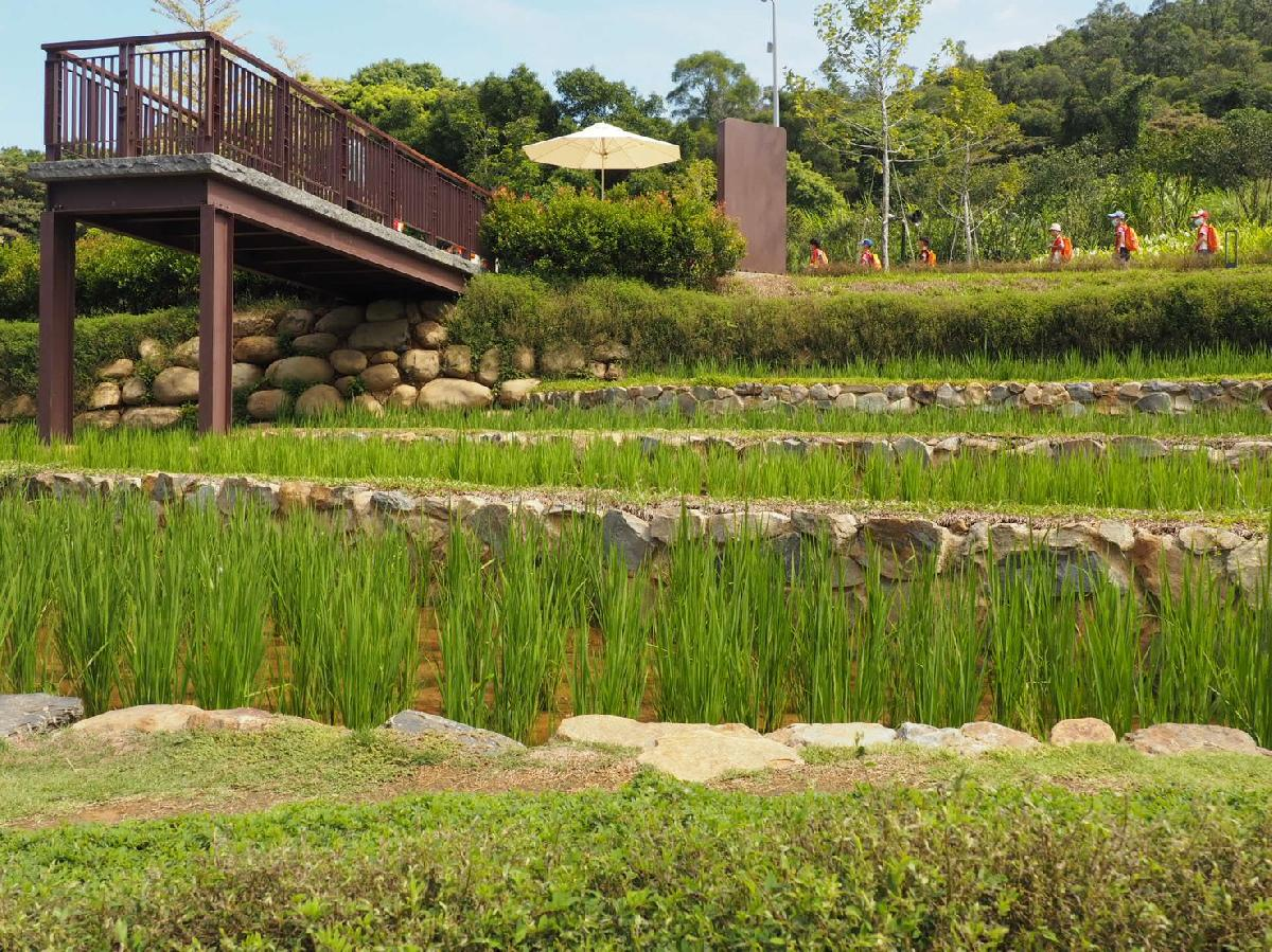 109-9-22-大有梯田生態公園_200922_9